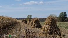 Augusta - Amish & Sand 033