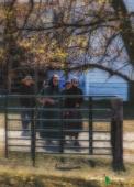 Augusta - Amish & Sand 113