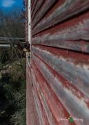 Augusta - Dells Mill 058