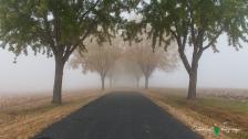 D60 Foggy Morning 004