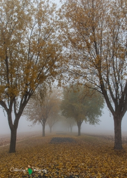 D60 Foggy Morning 006