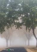 D60 Foggy Morning 010