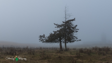 D60 Foggy Morning 015