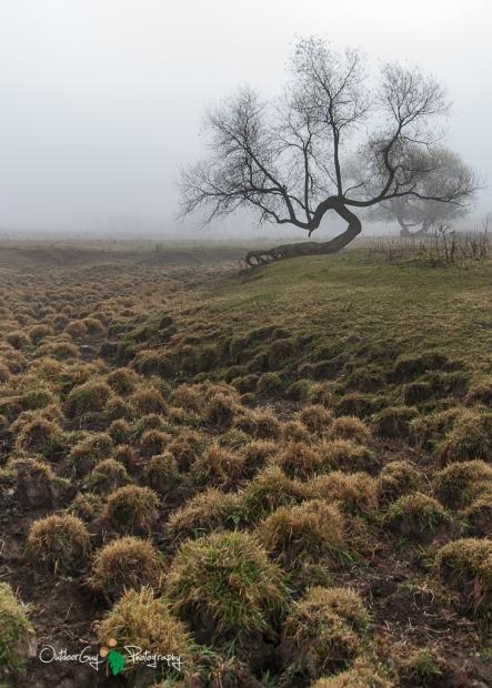 D60 Foggy Morning 021