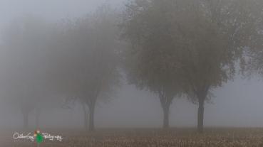 D7K Foggy Morning 010