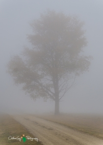 D7K Foggy Morning 012