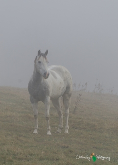 D7K Foggy Morning 021