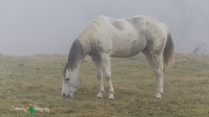 D7K Foggy Morning 022