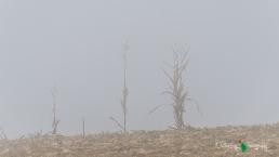 D7K Foggy Morning 049