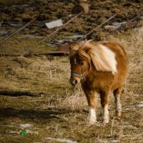 Blair Amish Project 048