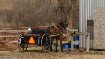 Blair Amish Project 061