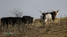 Blair Amish Project 065