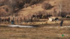 Blair Amish Project 067