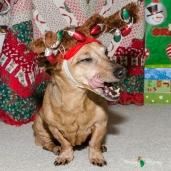 Christmas 2012 017