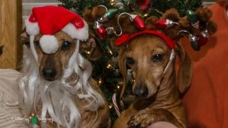 Christmas 2012 039