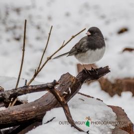 Backyard - Snowy April 005
