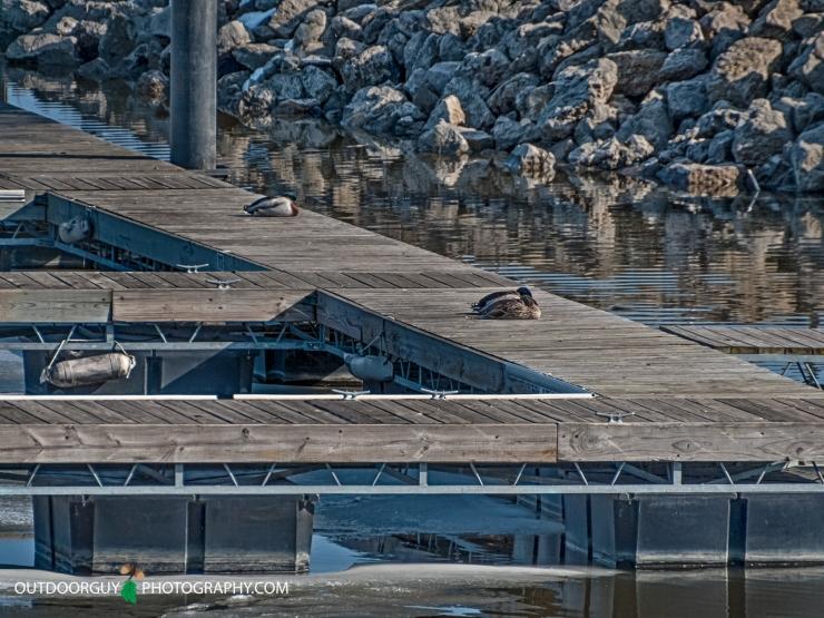 duck - duck - dock