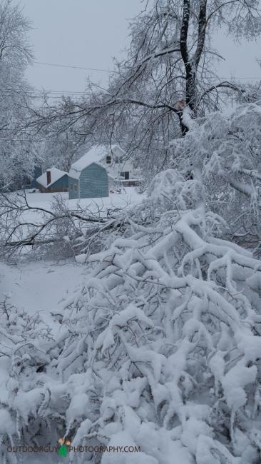 snow storm - trees down