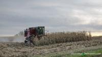 Corn Pickin