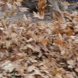 Leaf Rustle - Nerstrand State Park