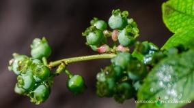 yummy blueberries
