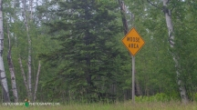Watch for Moose!