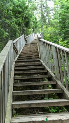The Stairs leading to and from Devil's Kettle