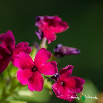 OutdoorGuyPhotography-6724