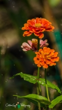OutdoorGuyPhotography-6843