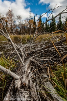OutdoorGuyPhotography-3218