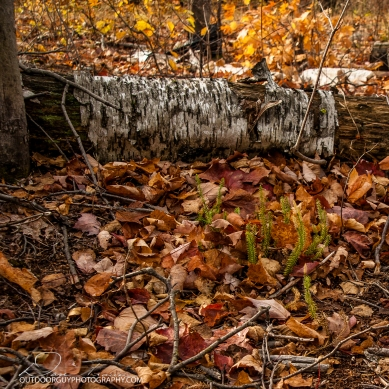 OutdoorGuyPhotography-3618