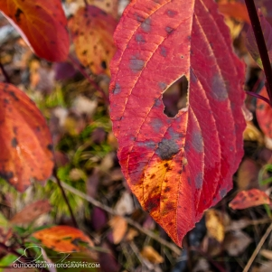 OutdoorGuyPhotography-6901