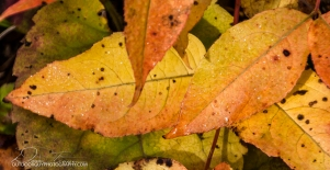 OutdoorGuyPhotography-6902